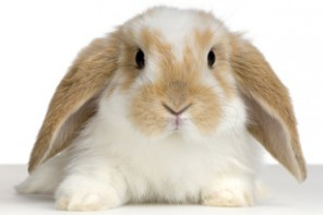 EU Celebrates 1 Year Ban On Animal Testing